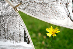 приходя весна Стоковая Фотография RF