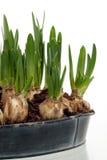 приходя весна 4 Стоковые Изображения