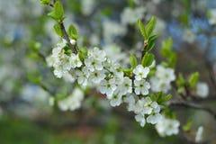 приходит весна Стоковое Изображение RF