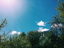 приходя весна день солнечный Стоковые Фото