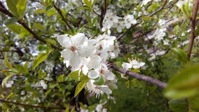 приходя весна Стоковое Изображение RF