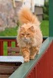 Прицеленный кот Стоковые Фото