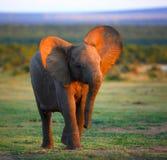 причаливая слон младенца стоковые фотографии rf