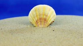 Причаливая seashell вставляя из песка, конец-вверх акции видеоматериалы