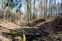 Причальте в лесе Стоковая Фотография RF