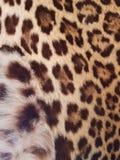 причальте к коже ягуара, виду характерному культуры Чьяпаса, мексиканського и майяского стоковые изображения rf