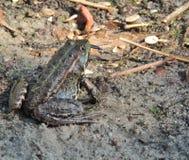 Причальте лягушку улавливая dragonfly стоковое изображение rf