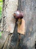 Причудливая дверь дерева Стоковые Изображения RF