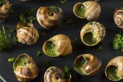 Причудливая французская горячая закуска Escargot Стоковая Фотография RF