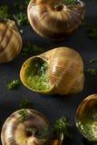 Причудливая французская горячая закуска Escargot Стоковое Изображение
