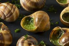 Причудливая французская горячая закуска Escargot Стоковая Фотография