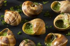 Причудливая французская горячая закуска Escargot Стоковое Изображение RF