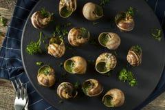 Причудливая французская горячая закуска Escargot Стоковые Фотографии RF
