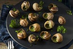 Причудливая французская горячая закуска Escargot Стоковые Изображения RF