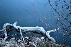 Причудливое животное журнала в озере стоковая фотография rf