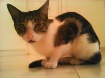 Причудливый кот стоковая фотография rf