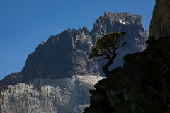 Причудливый силуэт дерева против горы Стоковые Фотографии RF
