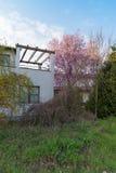 причудливая домашняя весна стоковые изображения rf
