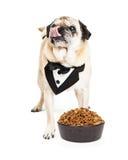 Причудливая собака с изысканной собачей едой Стоковые Фотографии RF