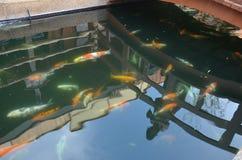 Причудливые карп или рыбы Koi в саде Стоковое Изображение