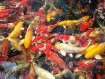 причудливые carpfish Стоковые Фото
