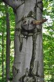 Причудливый чертеж дерева Стоковое Фото