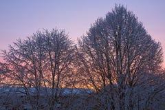 пришел заход солнца тумана вверх по зиме стоковые фотографии rf