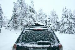 Пришл к лесу зимы стоковая фотография rf