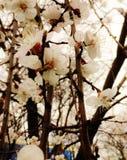 пришла весна Стоковое фото RF