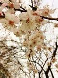 пришла весна Стоковая Фотография
