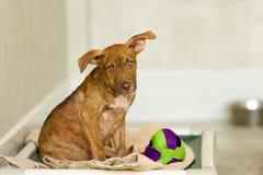 Приютите собаку стоковые фотографии rf