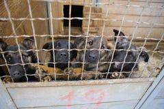 Приют для животных Дом восхождения на борт для собак Стоковые Фото