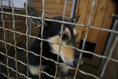 Приют для животных Дом восхождения на борт для собак Стоковые Фотографии RF