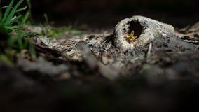 Приюченное деревце Стоковые Изображения RF