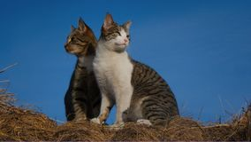 Приятели кота смотря вне на мире стоковая фотография rf