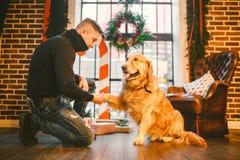 Приятельство человека и собаки Собака labrador породы золотого retriever любимца shaggy Человек тренирует, учит, что собака дает  стоковая фотография