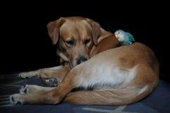 Приятельство попугая и собаки Стоковое Изображение