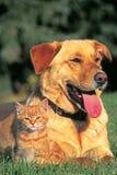 Приятельство собаки и котенка Стоковые Изображения RF