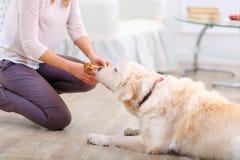 Приятная женщина имея потеху с собакой Стоковые Фото