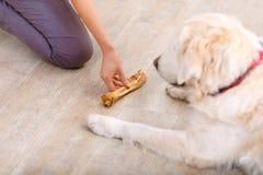 Приятная женщина имея потеху с собакой Стоковая Фотография