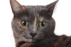 придавать правильную формуый конец кота Стоковая Фотография