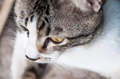 придавать правильную формуый конец кота Стоковые Изображения RF