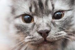 придавать правильную формуый конец кота Стоковое Изображение RF