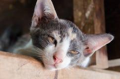 придавать правильную формуый конец кота Стоковые Фотографии RF