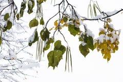 При белое покрытое одеяло листьям стоковое фото