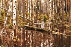 Прилив весны Стоковое Изображение