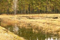 Прилив весны Стоковые Фотографии RF