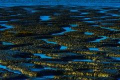 Прилив плоский Стоковая Фотография