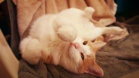 Придурковатый кот Стоковое фото RF