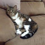 Придурковатый кот Стоковая Фотография